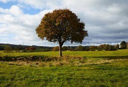 The old oak: a year in the life of a tree – photo essay | Chronique d'un pays où il ne se passe rien... ou presque ! | Scoop.it