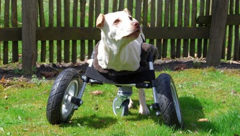 Dog Lovers Can Now Print These Amazing Open-Source DoggyWheels | Technology in Education | Scoop.it