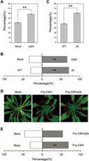 Cell Research - Viral effector protein manipulates host hormone signaling to attract insect vectors | Emerging Research in Plant Cell Biology | Scoop.it