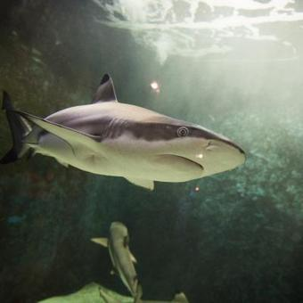 Le Soir ⎥L'Aquarium devient une attraction «4 soleils»   L'actualité de l'Université de Liège (ULg)   Scoop.it