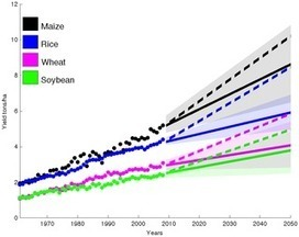 Yield Trends Are Insufficient to Double Global Crop Production by 2050 | Africa and Beyond | Scoop.it