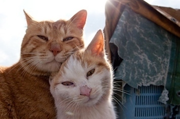 50 Amazing Photos From Cat Heaven Island In Japan | This Gives Me Hope | Scoop.it