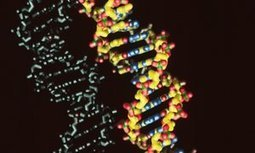Organisms created with synthetic DNA pave way for entirely new life forms | libros de divulgación científica | Scoop.it