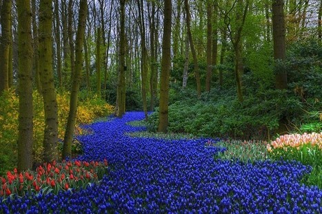 The Worlds 15 Most beautiful Gardens | GITravel | What Surrounds You | Scoop.it