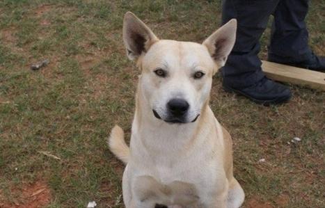 USA: Un chien aide la police à arrêter son maître   CaniCatNews-actualité   Scoop.it