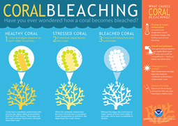 """NOAA declares third ever global coral bleaching event (""""severe bleaching is often lethal"""") 