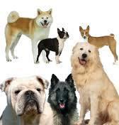 Les Présidents et leur chien, une longue tradition   Remue-méninges FLE   Scoop.it