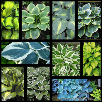This foliage is a gardener's best friend | Gardening Life | Scoop.it