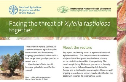 Factsheet on Xylella fastidiosa - International Plant Protection Convention