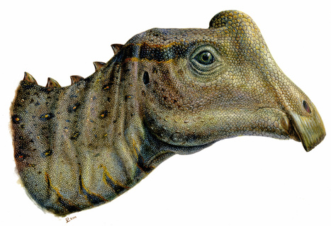 Getting to Know Joe, an Adorable Little Dinosaur | Paleontology News | Scoop.it