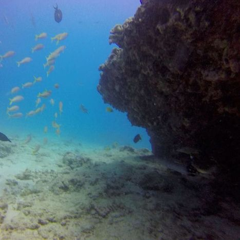 Ocean of fun! #Hawaii #scuba #Gopro #diving with #yellowstripegoatfish #trumpetfish #longnosebutterflyfish #orangespinedtangfish #oceanoffun #underwateradventure #underwaterworld with @hawaiiscubad... | ❀ hawaiibuzz ❀ | Scoop.it