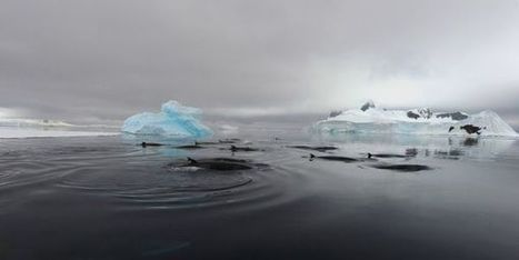 petition: It's Time for the U.S. to Take Action Against Iceland's Whaling | Inuit Nunangat Stories | Scoop.it