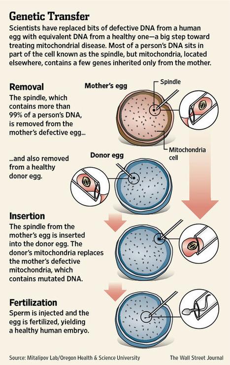 NA-BT181_DNA_G_20121024183306.jpg (555x879 pixels)   Bioinformatics Training   Scoop.it