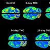 CognitiveScience