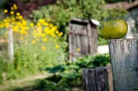 Les arguments nutritionnels du bio sont imbattables | Les colocs du jardin | Scoop.it