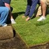 All about choosing the best artificial turf installers in Paradise Valley
