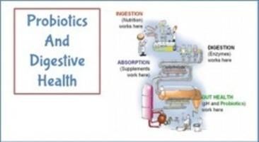 Best Probiotics For Men | Probiotic Solutions | topics by mari6lambert50
