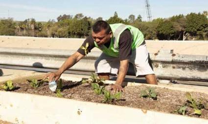 Construyen huerto urbano para deportados en Tijuana - Uno TV Noticias | Cultivos Hidropónicos | Scoop.it