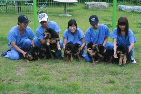 En Corée du Sud, cloner les animaux de compagnie est un business | WE DEMAIN. Une revue, un site, une communauté pour changer d'époque | Scoop.it