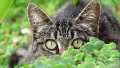 Scaredy-cat or Scared Cat | catnipoflife | Scoop.it