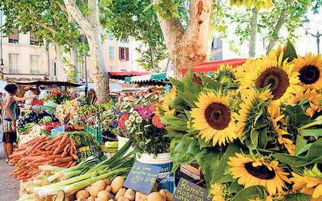France holidays: Provence vs Languedoc - Telegraph | Wine Tourism France | Scoop.it