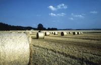Le Parlement veut donner le pouvoir aux Etats d'interdire les OGM | Corinne LEPAGE | Scoop.it