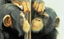 The Science of Empathy: Mirror Neurons | Emotional Wisdom | Scoop.it