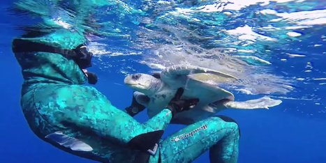 Diver Saves Sea Turtle And Receives Adorable Thank You | Xposed | Scoop.it