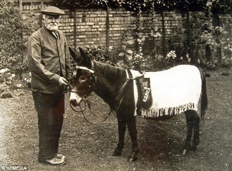 The donkey born in a First World War trench which became a mascot for British troops | Battle of the Somme | Scoop.it