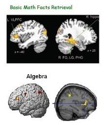 Eide Neurolearning Blog: Fact Retrieval vs. Problem Solving in the Brain | IKT och iPad i undervisningen | Scoop.it