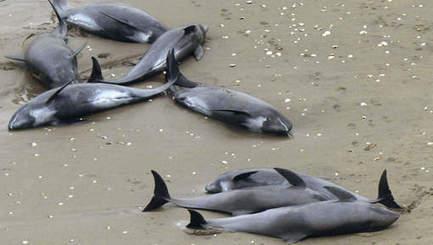 Fukushima : des dauphins morts les poumons irradiés @Zehub | Mon moleskine | Scoop.it