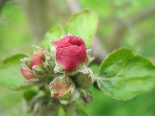 Les conseils de jardinage de mai au verger c t jardin for Conseil de jardinage