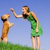 Dogington Post Dog Training
