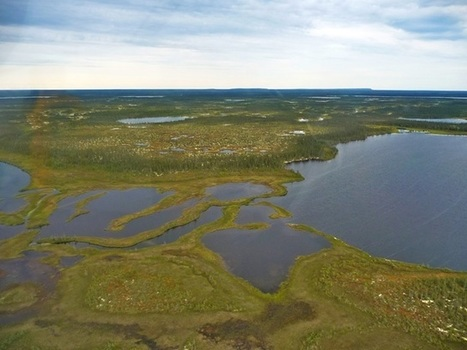 Global warming threatens Hudson Bay Lowlands Arctic refuge | Sustain Our Earth | Scoop.it