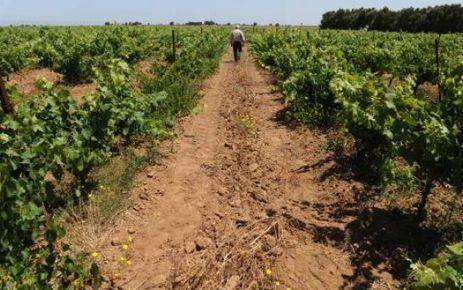 Maroc: le vin poursuit sa montée en gamme, malgré les tabous | Le vin hors de France | Scoop.it