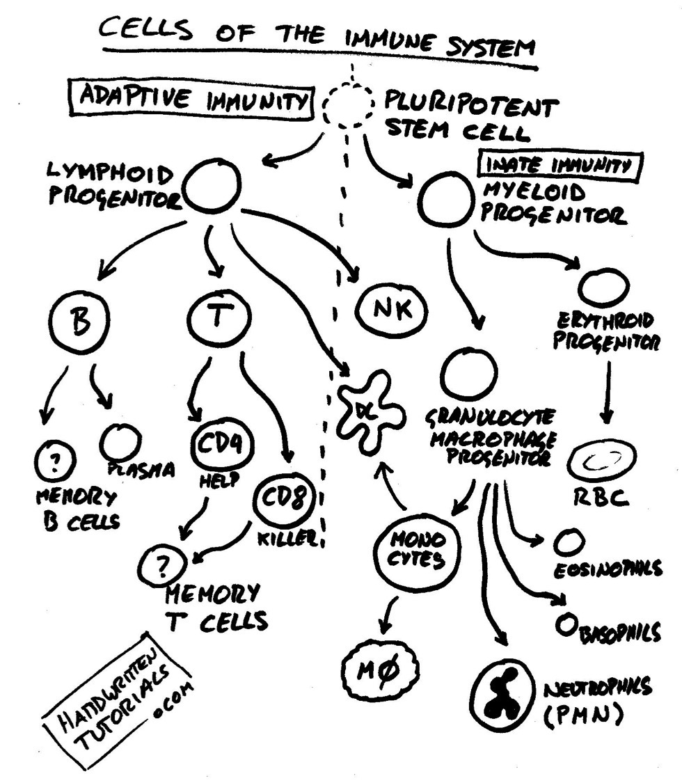 immunology handwritten tutorials