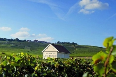 Roederer to make 'Coteaux Champenois' red wine from 2015 harvest - Decanter | In The Glass Wine and Spirits News | Scoop.it