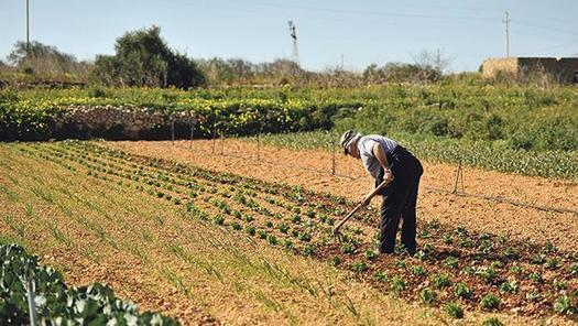 Farmers giving up because they feel cheated, not because of hard work