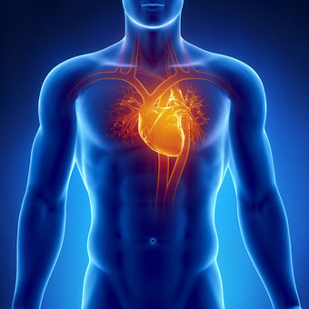 Hybrid 'patch' could replace heart transplants | bambou148 | Scoop.it