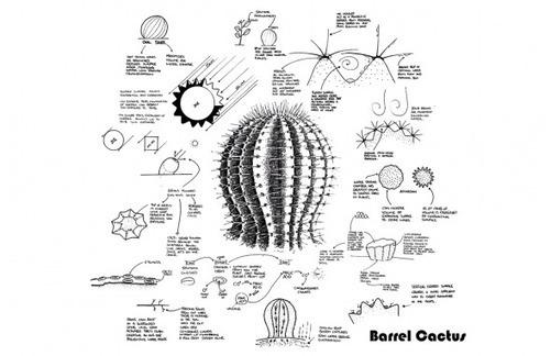 Diagram Of A Hedgehog Cactus - Download Wiring Diagrams •