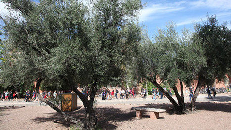 Tucson Harvests Reduce Food Waste, Increase Sustainability | CALS in the News | Scoop.it