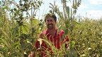 Agent Orange chemical in GM war on resistant weeds   Plant Science   Scoop.it
