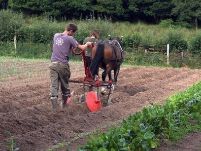 Horsepower - the future of farming? | The Barley Mow | Scoop.it