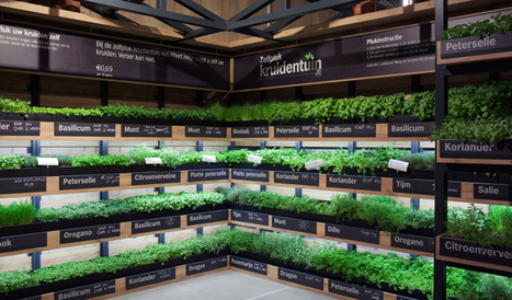 Dutch shoppers pick own herbs in supermarket garden | Springwise | @liminno | Scoop.it