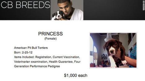 Chris Brown vende cachorros pitbull por internet a 1.000 dólares cada uno – CNN en Español – Ultimas Noticias de Estados Unidos, Latinoamérica y el Mundo, Opinión y Videos - CNN.com Blogs | Saber diario de el mundo | Scoop.it
