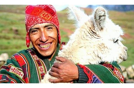 Lana de Alpaca, Lujo sostenible! | Cosas que interesan...a cualquier edad. | Scoop.it