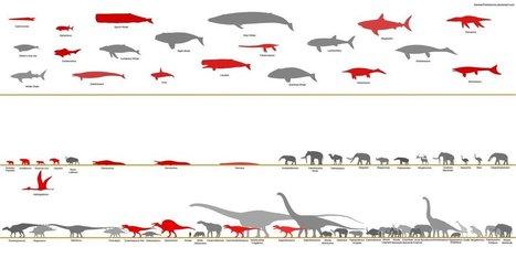 Animals Chart | Ter leering ende vermaeck | Scoop.it