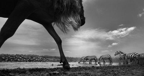 Secrets of Wildlife on Kenya's Masai Mara | Backstage Rituals | Scoop.it
