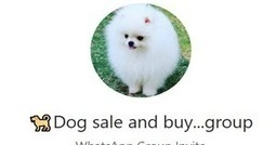 Dog Sale And Buy WhatsApp Group Link Of 2018 |