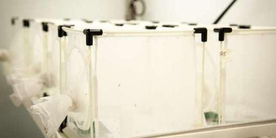 Le biocontrôle, une alternative aux pesticides